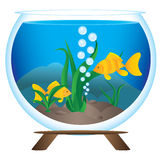Aquarium Stock Images
