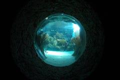 Aquarium Stock Foto's
