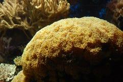 Aquarium. Underwater aquarium image in the zoo Royalty Free Stock Photography