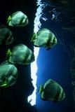 Aquarium Royalty Free Stock Photo