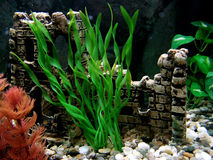 Aquarium Photographie stock