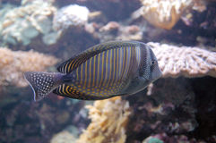 In aquarium Royalty-vrije Stock Foto's