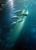 In aquarium Stock Images