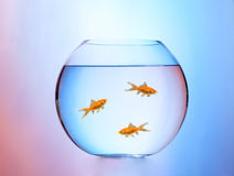 Aquarium Lizenzfreie Stockbilder
