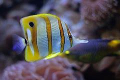 Aquarium Stock Image