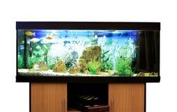 Aquarium. Wooden furniture home  isolated stock images