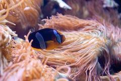 Aquarium. Composition of an exotic, tropical sealife at the aquarium, Long Island NY royalty free stock image