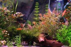 Aquarium 2 Lizenzfreies Stockbild