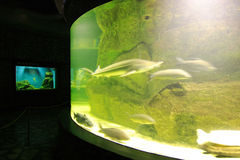 Aquarium 2. Aqua-center in Vladivostok.Russia. Far-East stock image