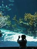 Aquarium 2 Royalty Free Stock Photos