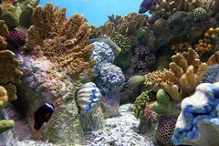 Aquarium 2 stock image
