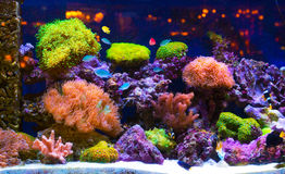 Aquarium photos stock