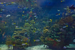 Aquarium images stock