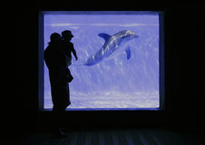 Aquarium. The silhouette of a parent holding a toddler, looking at the dolphin swimming in the aquarium in front of them Stock Photography