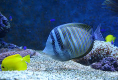 Aquarium Lizenzfreie Stockfotos