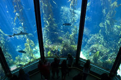 Aquarium. Large aquarium with fish and coral reefs Royalty Free Stock Images