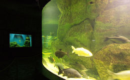Aquarium 3. Aqua-center in Vladivostok.Russia. Far-East Royalty Free Stock Images