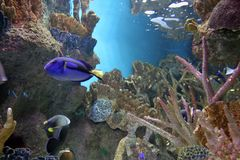 Aquarium 3 Images stock