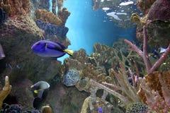 Aquarium 3 Stock Images