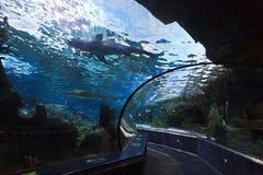 Aquarium stockfoto