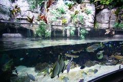 Aquarium. A Saltwater fish display at an aquarium royalty free stock image