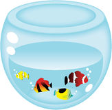 Aquarium. A wonderful aquarium with the beautiful fish inside Stock Photo