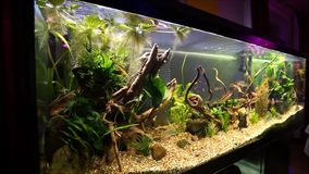 Aquarium Photographie stock libre de droits