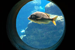 Aquarium. A fish swimming in aquarium stock image