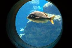 Aquarium. A fish swimming in aquarium Stock Image