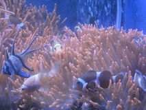 Aquarium Stock Fotografie