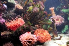 Aquarium 5 Lizenzfreies Stockbild