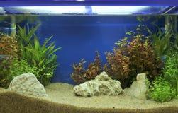 Aquarium Photographie stock