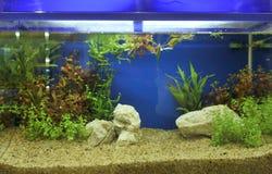 Aquarium Photos stock