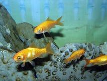 Aquarium Stockbilder