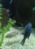 Aquarium Images stock