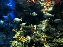 Aquarium. Underwater aquatic life with fishes Stock Photos