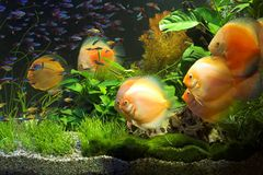 AQUARIUM. Various fishes in an aquarium royalty free stock photos