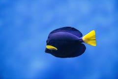 Aquarium Stock Afbeelding