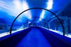 Free Aquarium Royalty Free Stock Image - 65751936