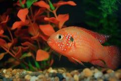 Aquarium Royalty-vrije Stock Afbeeldingen