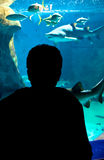 Aquarium. Young man in front of a large aquarium Royalty Free Stock Photography