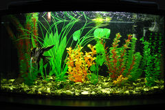 Aquarium. Fragment of aquarium full of water plants stock photo