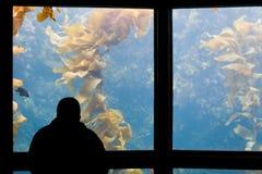 Aquarium. A silhouetted man gazes into an aquarium tank stock image