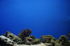 Aquarium. With blue water without any fishes Stock Images