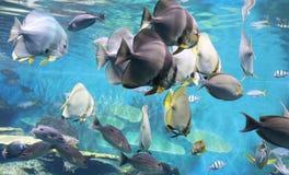 Free Aquarium Stock Image - 7891881