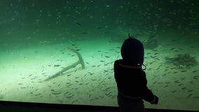 Aquarium Stockfotografie
