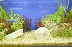 Aquarium photo libre de droits