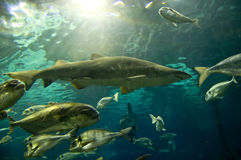 Aquarium Stock Photography