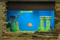 Aquarium royalty-vrije stock fotografie