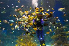 Aquarium Royalty Free Stock Photography